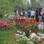 Orasul trandafirilor chinezesti 5